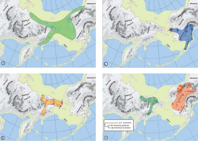 Large scale biogeographic patterns in Beringia with the maximum extent of the Bering Land Bridge