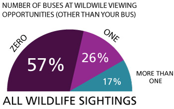 a graph that shows that over half of all wildlife sightings on the park road has only 1 bus present