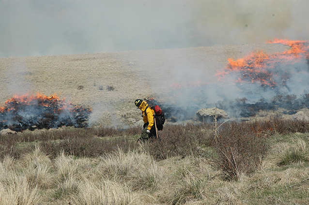 Firefighters ignites prescribed burn with a driptorch