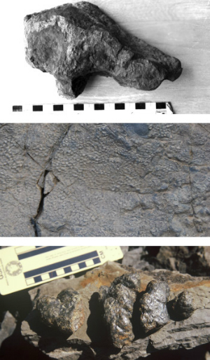 Dinosaur tracks in rock
