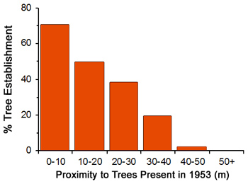 bar graph shows decreasing tree establishment with closer proximity to more trees