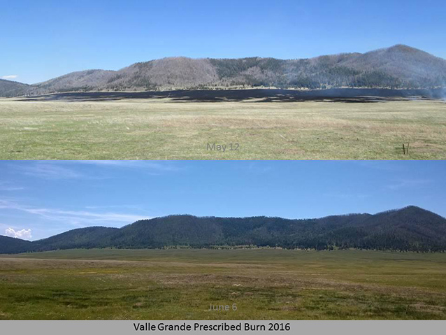 photo comparison of burned area and healthy grassland that has regrown