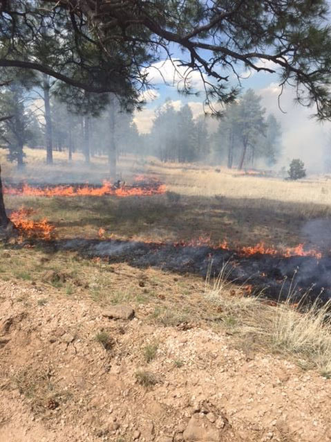 low intensity prescribed fire