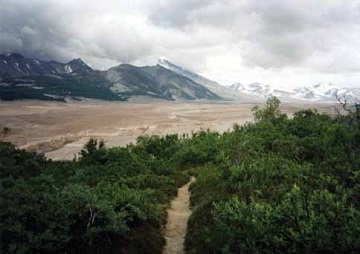 a sandy path cuts through shrubs with a brown valley and mountains in the background