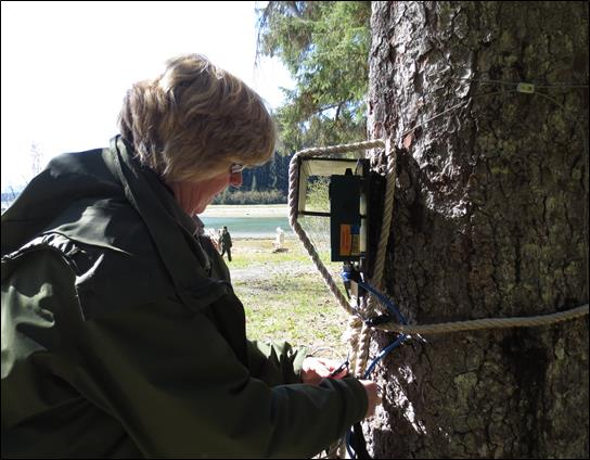 woman checks bat detector on tree