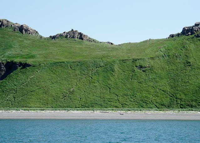 a green hillside with numerous animal trails visible leading down to a beach