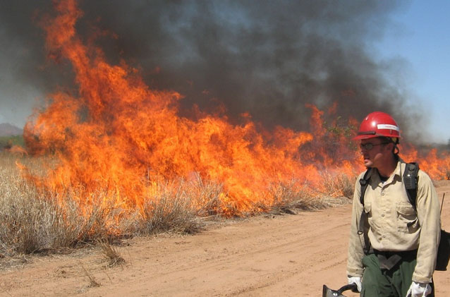 Fire crew member watches burning buffelgrass from across a dirt road