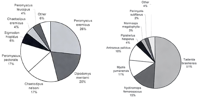 Pie charts of relative abundance of rodents (left) and relative abundance of bat species (right).