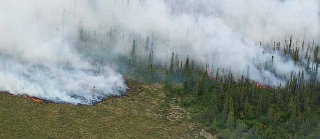 aerial view of a wildland fire in a spruce forest