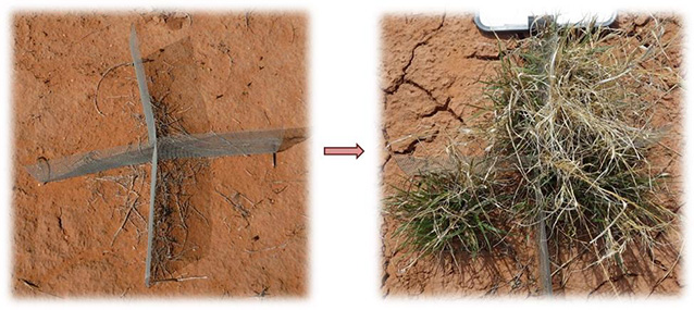 two photos showing a conmod on bare soil, and the same conmod with plants growing around it