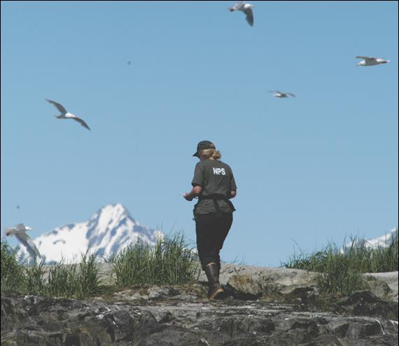 Park researcher on land with birds swirling above