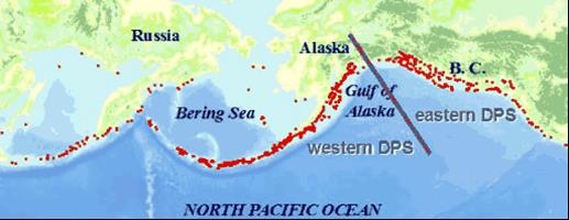 map of sea lion haulouts on north pacific ocean