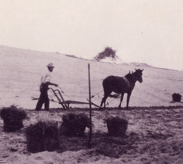 Horse and plow stabilizing Kill Devil Hill, 1928
