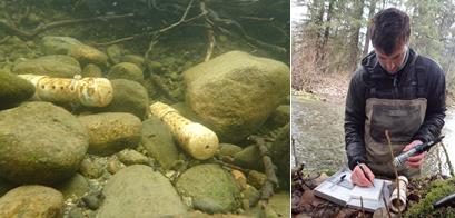 left: temperature sensors sit on river rock, right: scientist works with sensor