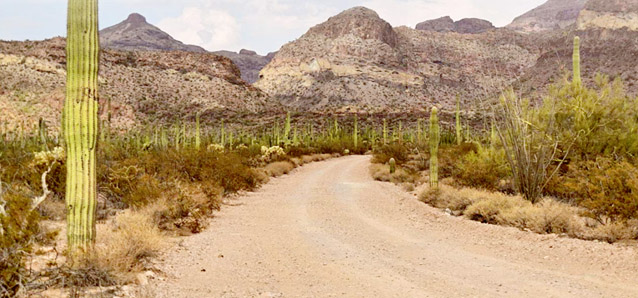 Road through the desert surrounded by cacti and other desert vegetation and soils
