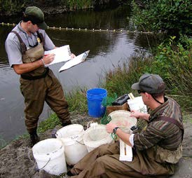 Biologists along the creek bank taking fish measurements and recording data