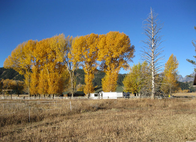 Planted windrows of cottonwoods within Mormon Row, 2010 (C. Mardorf, NPS)