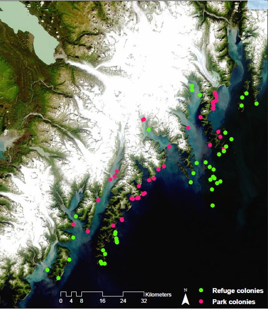 Seabird colony locations along the Kenai Fjords coast.