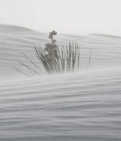 Close-up of sand/dust blowing along the surface of gypsum dunes