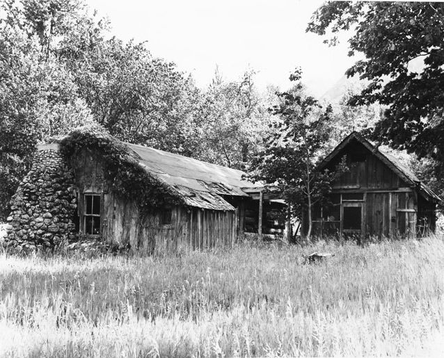 Black and white image of an aging wooden cabin with vines on the side and a rock chimney.