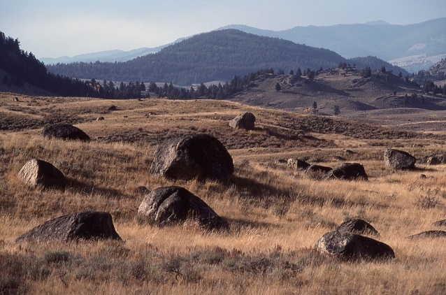Glacial boulders (erratics) dot a field in Yellowstone National Park