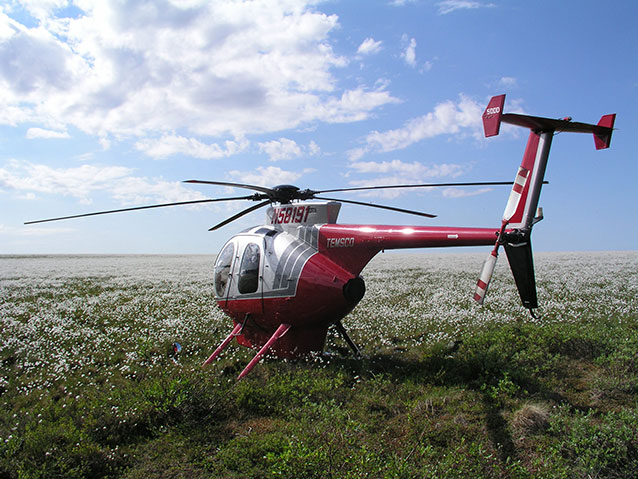 helicopter in a field of cottongrass on a sunny summer day