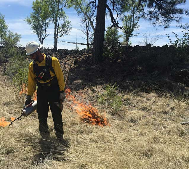 Firefighter ignites a prescribed burn with a driptorch.