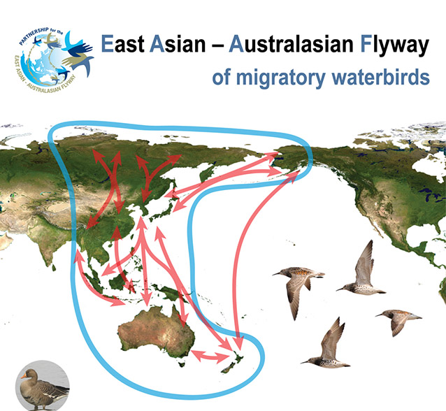 map of the world centered on the pacific ocean, showing long bird migration routes