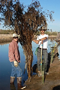 Working to remove invasive species