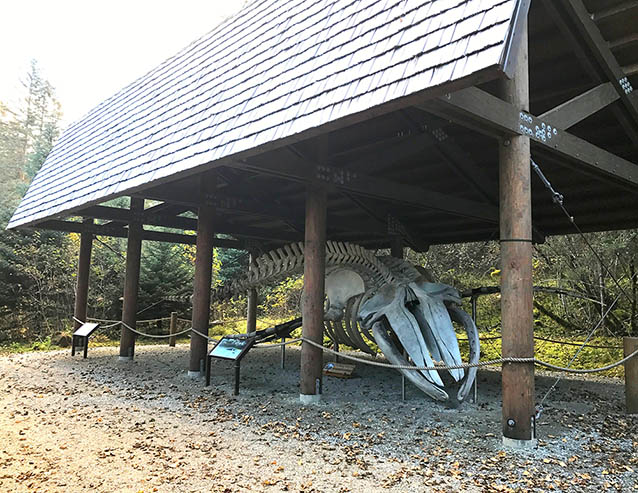 a whale skeleton under a covered shelter