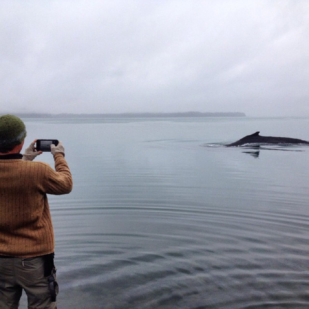 a person standing near the ocean taking a photo of a whale breaching