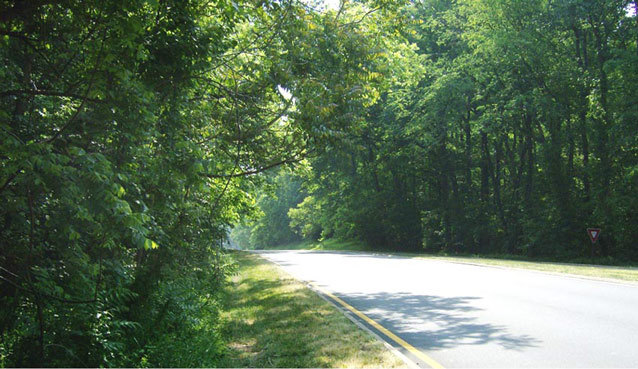 Sunlight filters through a thick canopy of trees, which surrounds both sides of a road.