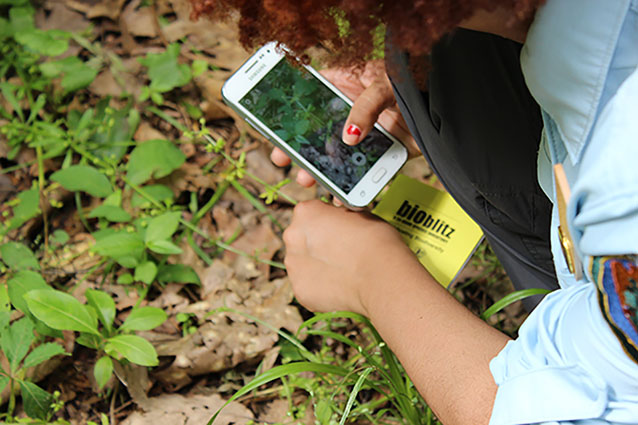 A youth ambassador takes a photo with her smartphone for BioBlitz 2016 in Washington, DC.