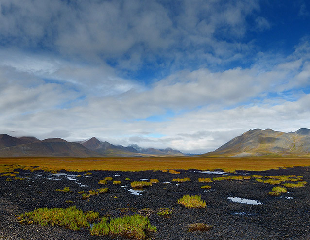 landscape of tundra and mountains