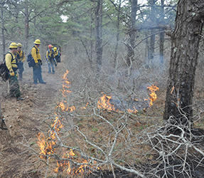 Firefighters monitor the prescribed fire as it burns.
