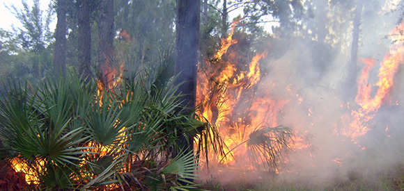 Vegetation burning
