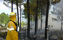 A firefighter stands near a burned area while a sprinkler scatters water into the burned area.