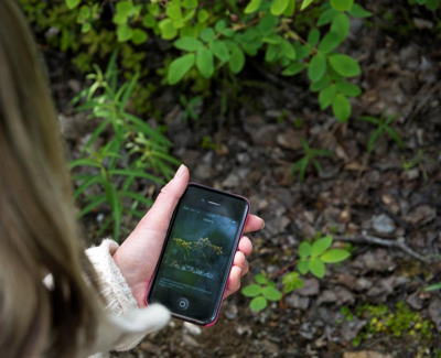 a person uses a cell phone app to identify flowers