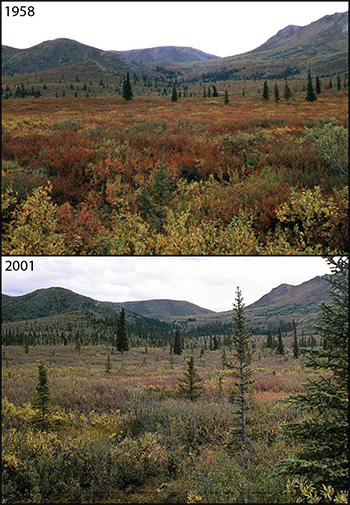 Comparing Denali images from 1958 to 2001