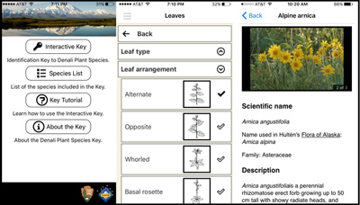 screenshots of the new plant app, shows how you can select the type of leaves to determine plant