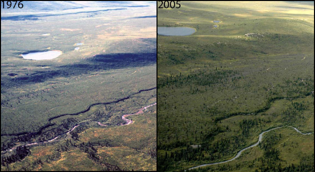 side by side pictures show that in 30 years trees began to invade around a river