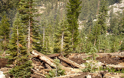 Trees and fallen logs in mountainous area.