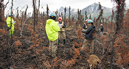 Men and women in hardhats stand in a recently burned boreal forest.