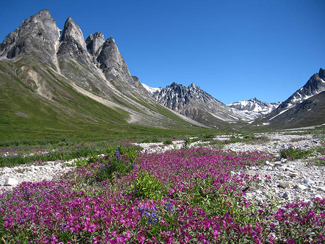 wildflowers bloom at Lake Clark Wilderness