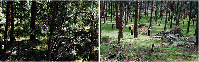 Left: thick forest with dense trees; Right: open forest with fewer trees.