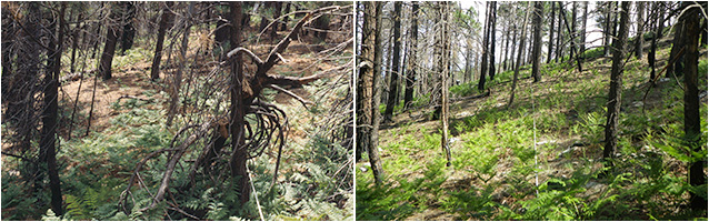 Before and after prescribed fire treatments