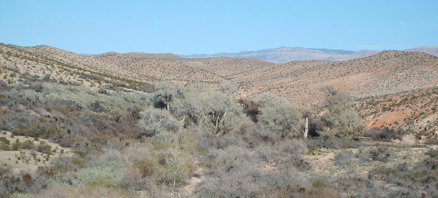 Low scrub vegetation dots the rolling topography of the desert landscape at Tassi Ranch.