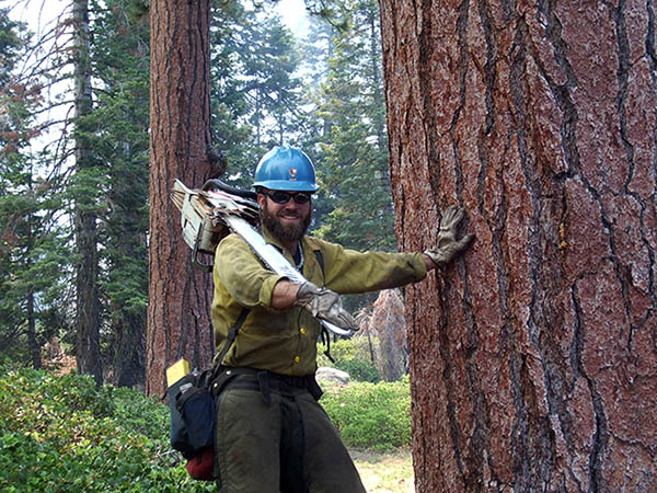 Dan Holmes in firefighting gear, holding a chainsaw, near a large tree.
