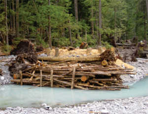 Logs and other material along the river