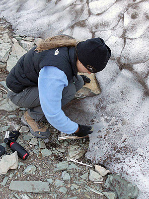 An archeologist excavates through glacial ice.